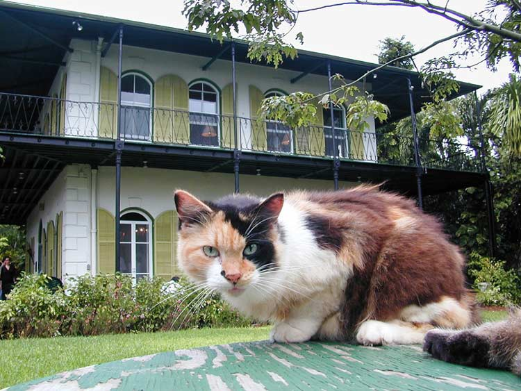 Hemingway House in Key West, Florida is as famous for its resident cats as it is for the author himself. Photo courtesy of Key West Visitors Bureau