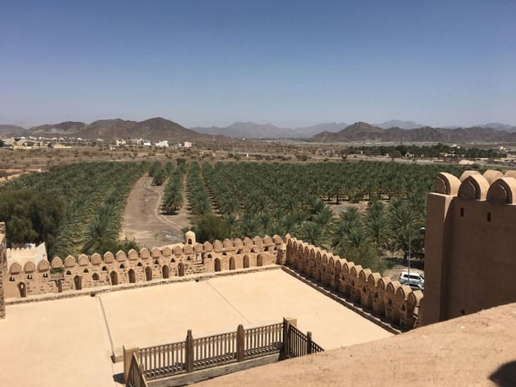 Date orchards surround the city of Nizwa in Oman, southeastern Arabia. Photo by Sue Sanders.