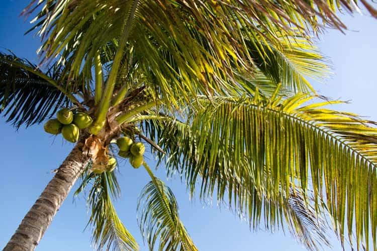 Enjoy the Carribean