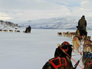 Dog sledding in Abisco Sweden
