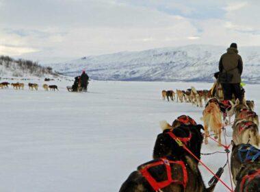 Dog sledding in Abisco Sweden