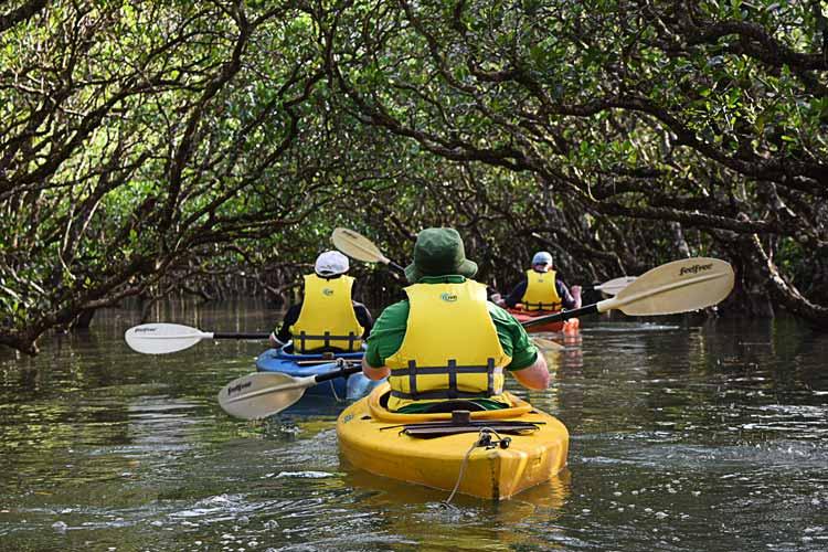Enjoy kayaking through the mangroves.