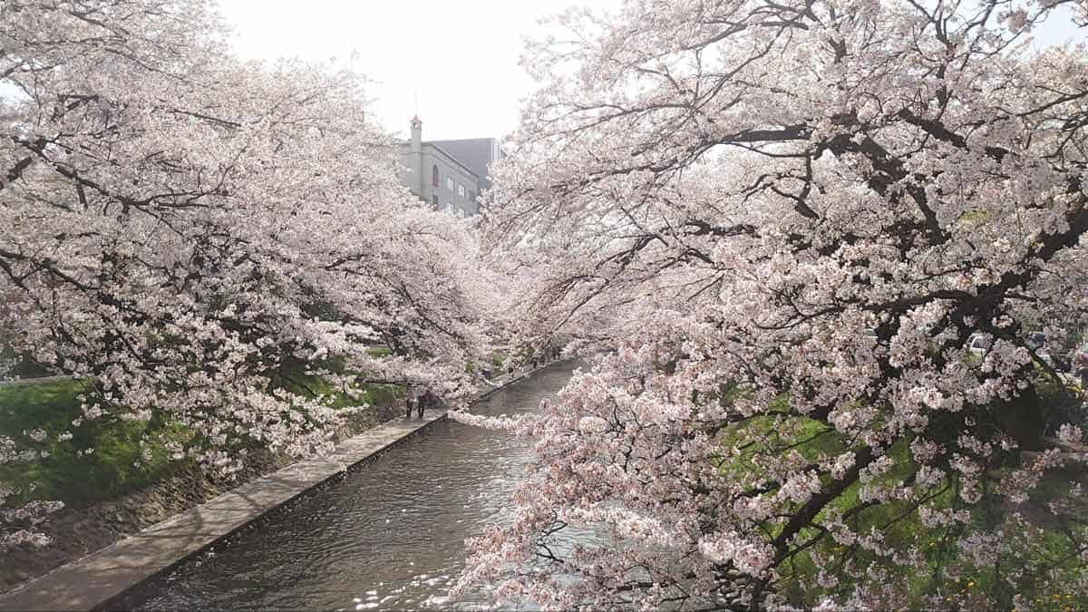 10 Best Places to See Cherry Blossoms in Japan | Spring Travel in Japan
