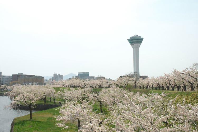 Goryōkaku cherry blossoms. CC Image by Yamaguchi Yoshiaki