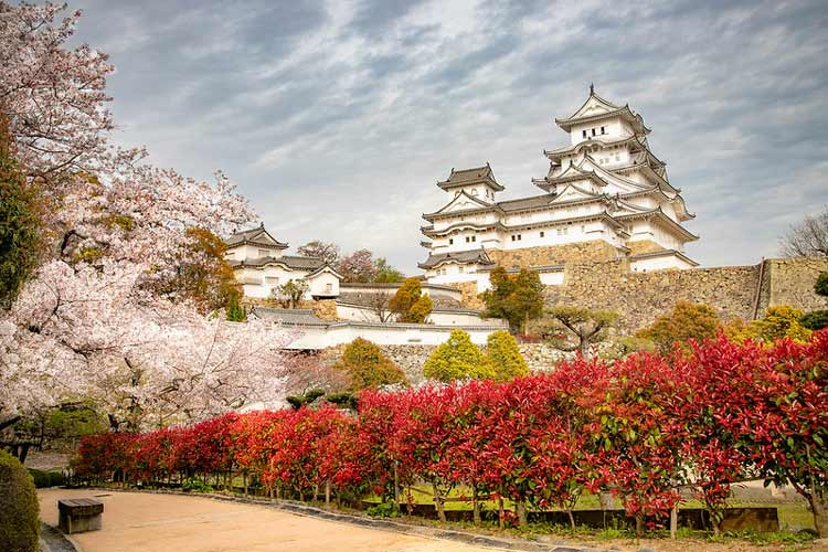 Cherry Blossoms in spring at Himeji Castle in Hyogo. CC Image by Paulo Philippidis