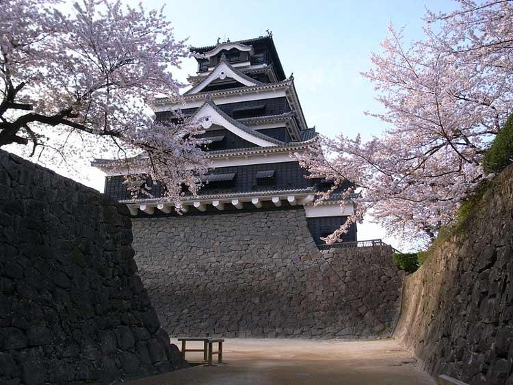 Blooming cherry blossoms at Kumamoto Castle in Japan. CC Image by Masahiko OHKUBO