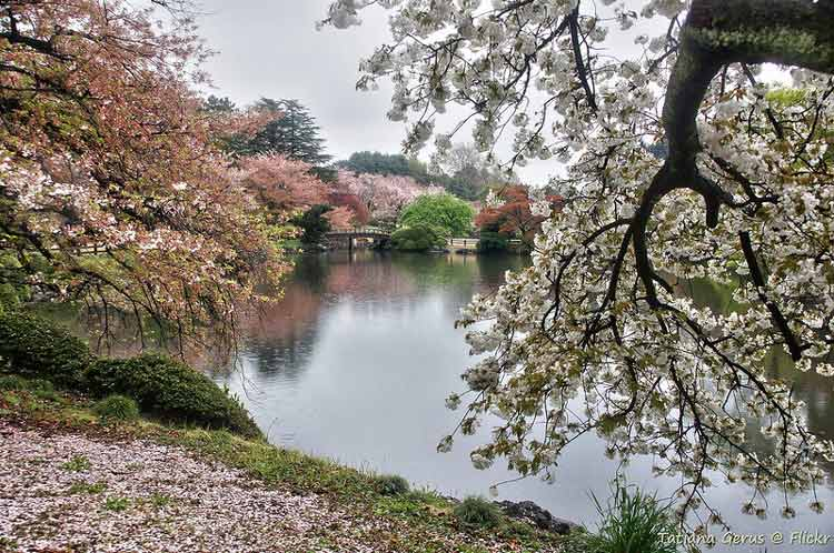 Shinjuku Gyoen National Garden in Japan. CC Image by Tatters ✾