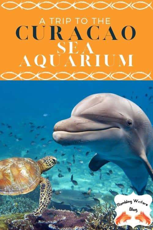 Curacao Island: Are you ready to swim with dolphins and stingrays, feed turtles and see a variety of fish? Check out the Curacao Sea Aquarium and the Dolphin Academy on the Curacao Island
