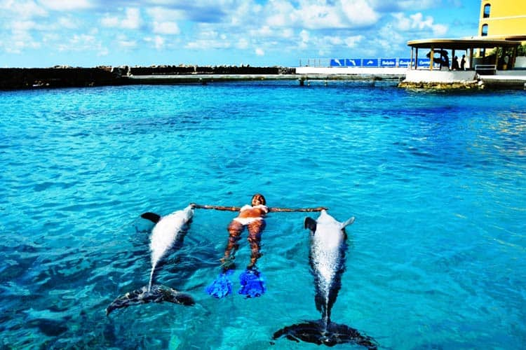 Free swim with dolphins is one of many delightful experiences at the Dolphin Academy in Curacao. Photo courtesy of the Dolphin Academy