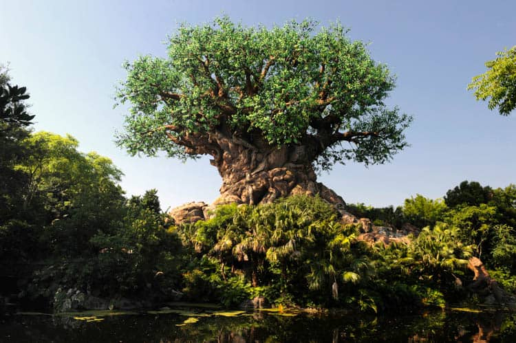 The Tree of Life in Disney's Animal Kingdom houses a 3-D theater where you can watch movies.