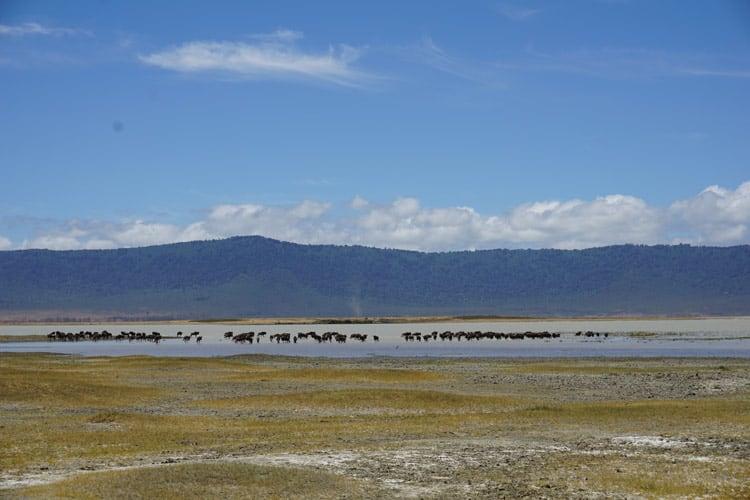 Ngorongoro Crater in Tanzania. Photo by Michael Storey