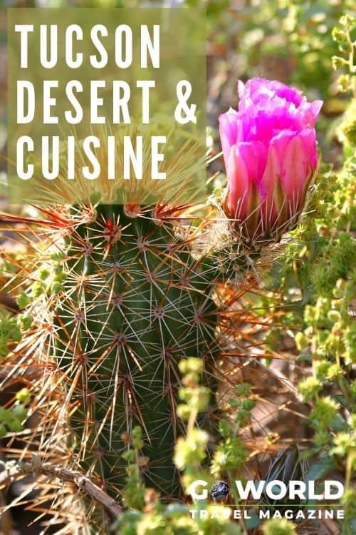 Explore the Tucson desert & inspired cuisine. This Arizona city has benign 'monsters,' gourmet hot dogs and surprisingly lush desert. #TucsonDesert #SonoraDesert #Tucsoncuisine
