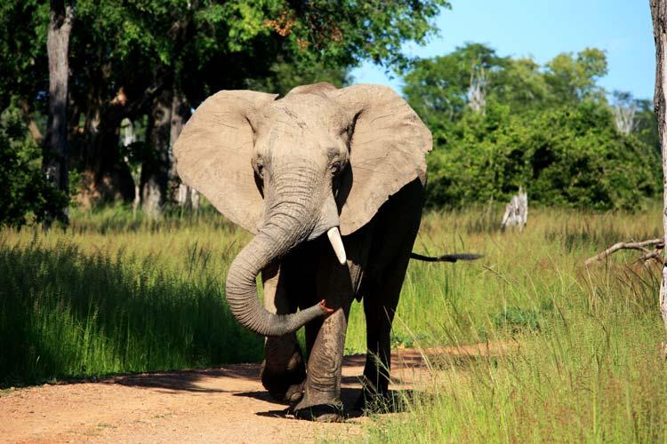 Wildlife in Zambia
