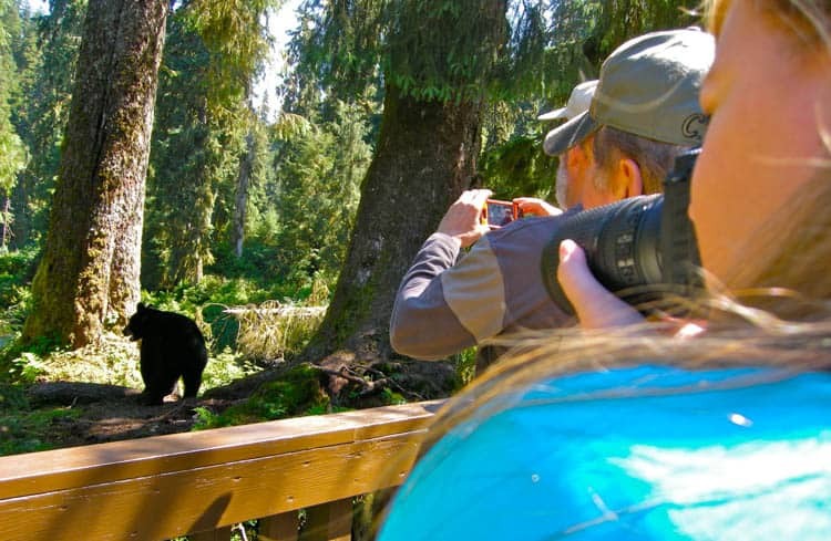 Seeing—and photographing—wild bears is a key attraction for visitors to Alaska in summer