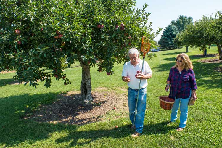People picking fruit along the Fields of Gold Farm Trail. Photo courtesy of Fields of Gold