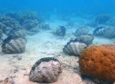 Diving in Yap Giant Clam Farm