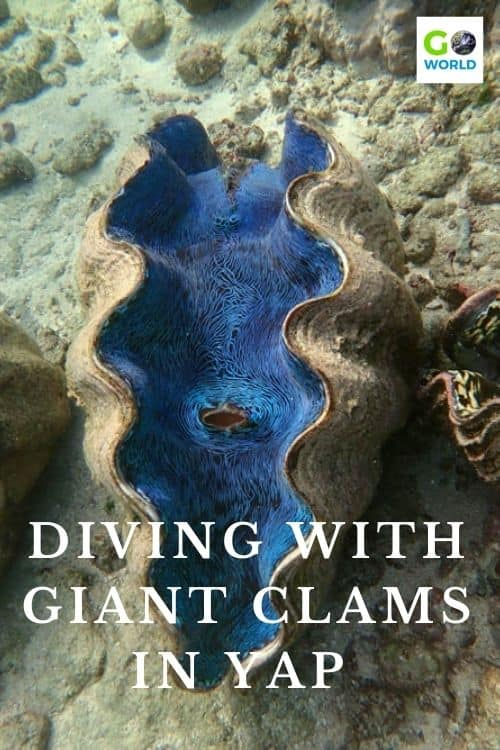 Diving in Yap is an underwater dream of rich coral habitats suited to some of the world's largest sea creatures including giant clams. #Divingvacation #diving #adventuretravel #ecotourism