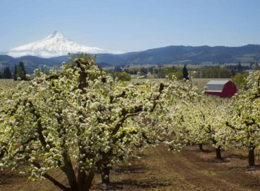 Trails in America, Hood River apple orchards in Oregon. CC Image by Bonnie Moreland