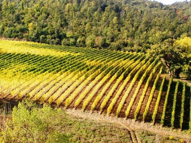 Vineyards abound throughout the Tuscan countryside. Photo by Victor Block
