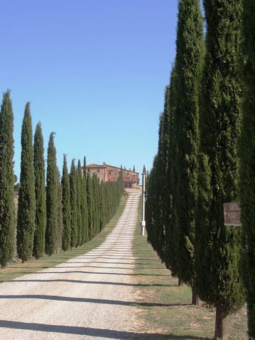 Cypress trees line the entryways to villas throughout Tuscany. Photo by Victor Block