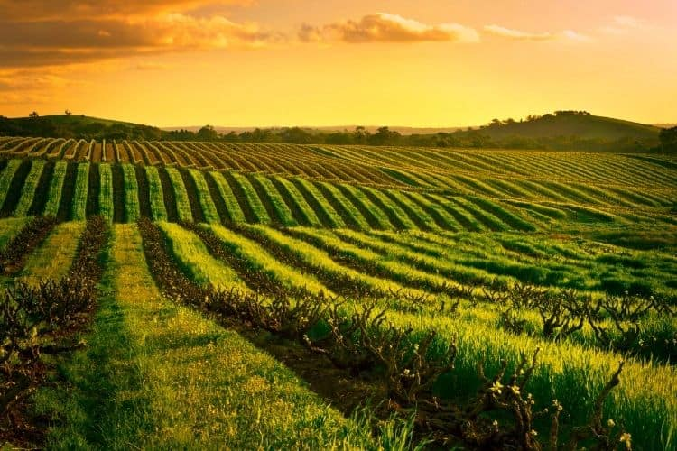 Barossa Valley Australia: Wine regions not in Europe