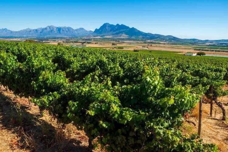 Stellenbosch South Africa Wine Region