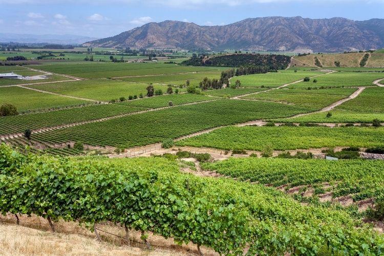 Casablance Chile Wine region outside Europe
