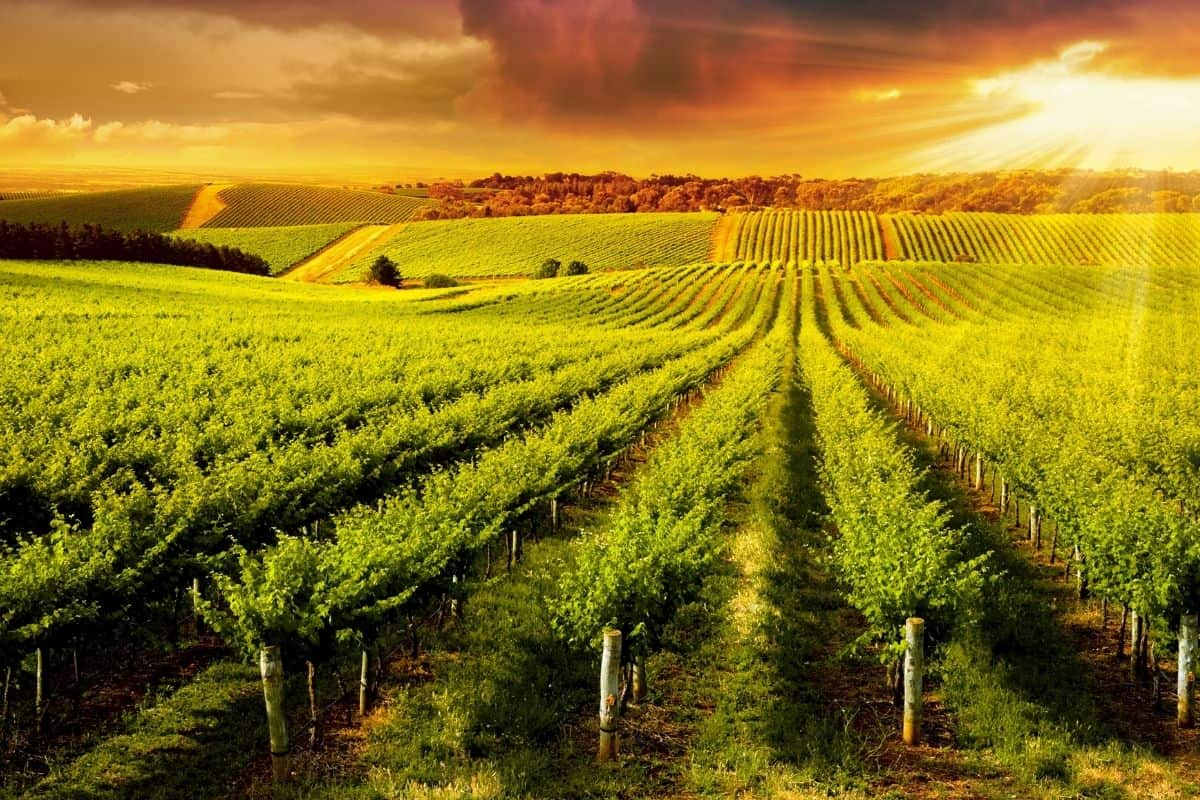 Discover Five Wonderful World-Class Wine Regions That Aren't in Europe