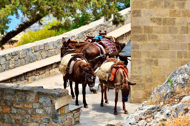 Donkeys waiting to be rode on Rhodes