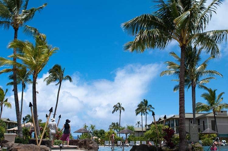 Palms around the pool at the Westin Princeville Ocean Resort Villas