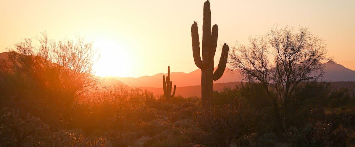 Cactus in the Desert by Joe Cook