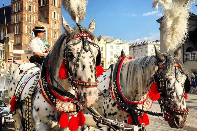 Dalmatian-like horses in Market Square