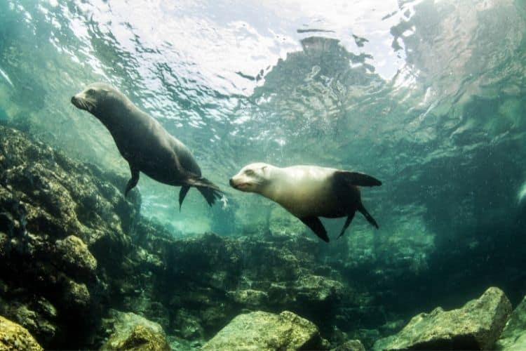 La Paz Seals