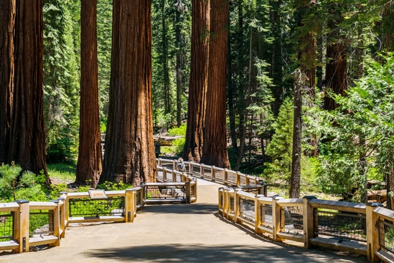 Mariposa Grove of giant sequoias is the largest sequoia groves in Yosemite National Park. Photo courtesy of Visit Yosemite/Madera County