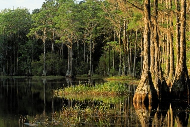 Enjoying nature in Tallahassee