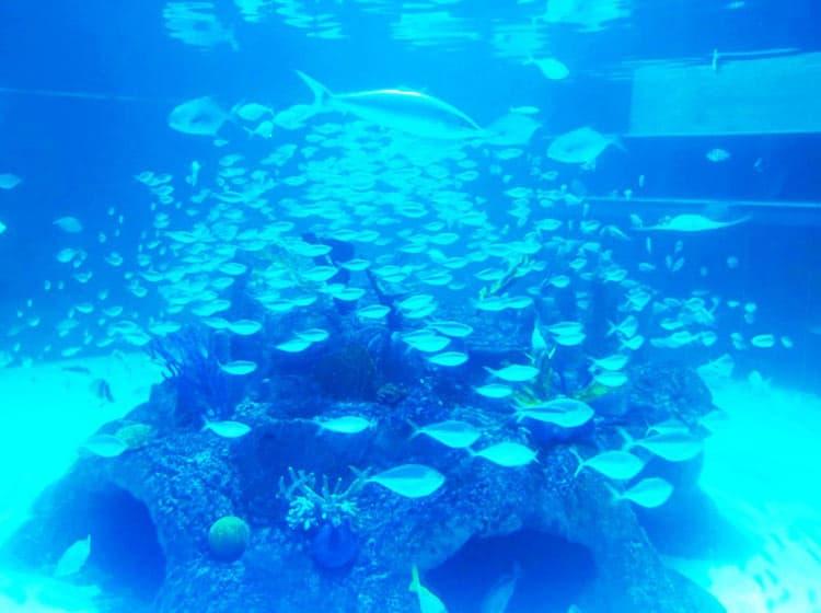 A fishing frenzy ensues at Aquarium Encounters in Marathon, Florida. Photo courtesy of Aquarium Encounters
