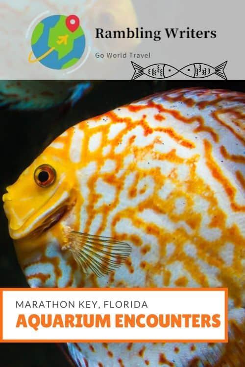 Aquarium Encounters, Marathon Key, Florida: Are you ready for the interactive aquarium experience of a lifetime? Check out Aquarium Encounters in Marathon Key, Florida.