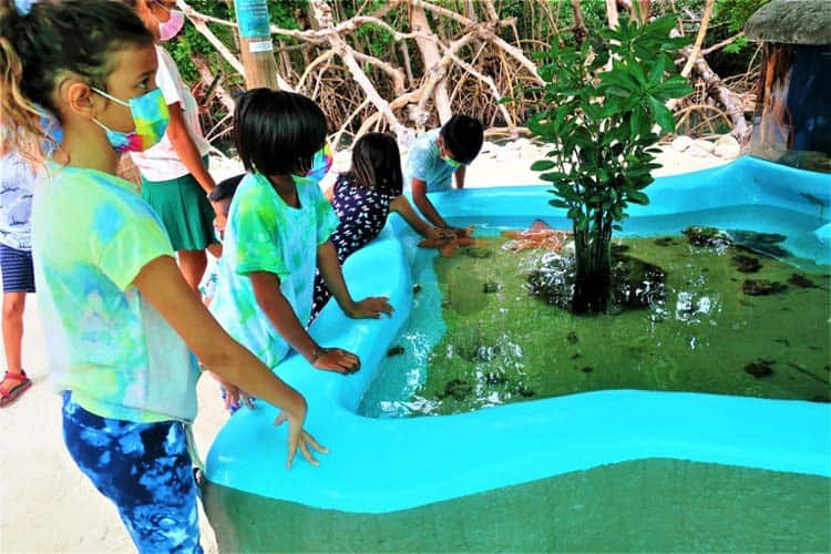 Multiple touch tanks delight young and old at Aquarium Encounters in Marathon, Florida. Photo by Victor Block