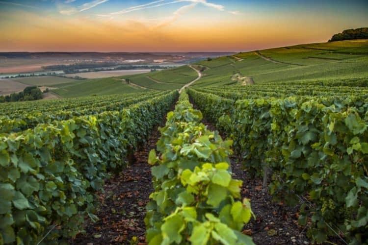 Champagne Wine Region in France