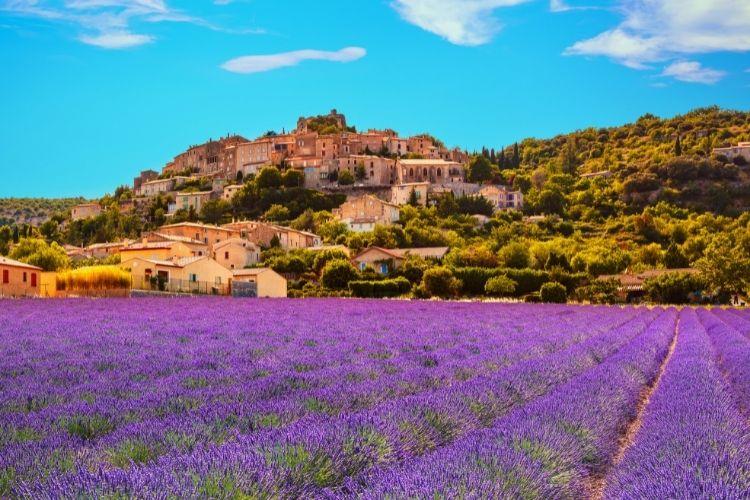 Lavender fields in Provence Wine Region