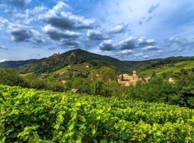Wine Regions in France