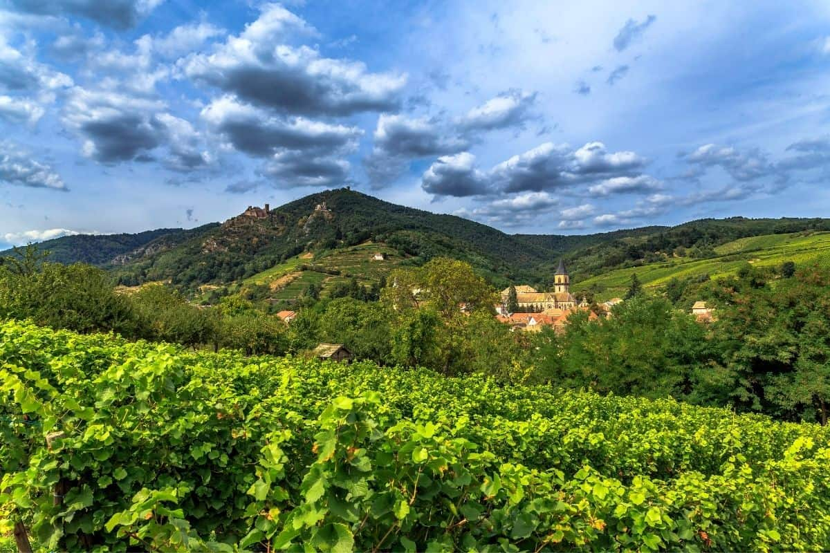 Explore the Top Wine Regions of France: Tasting With Stunning Scenery