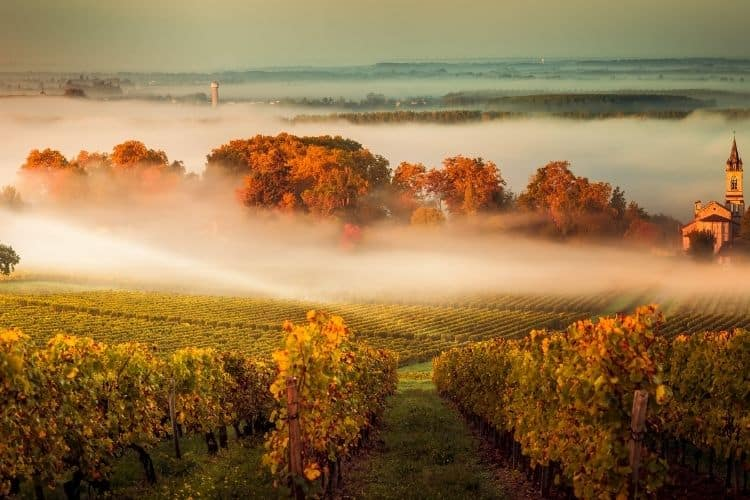 Bordeaux Wine Region in France