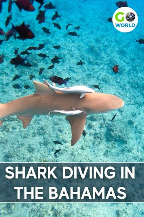 A shark dive in the Bahamas produces stunning underwater photos and plenty of adrenaline.