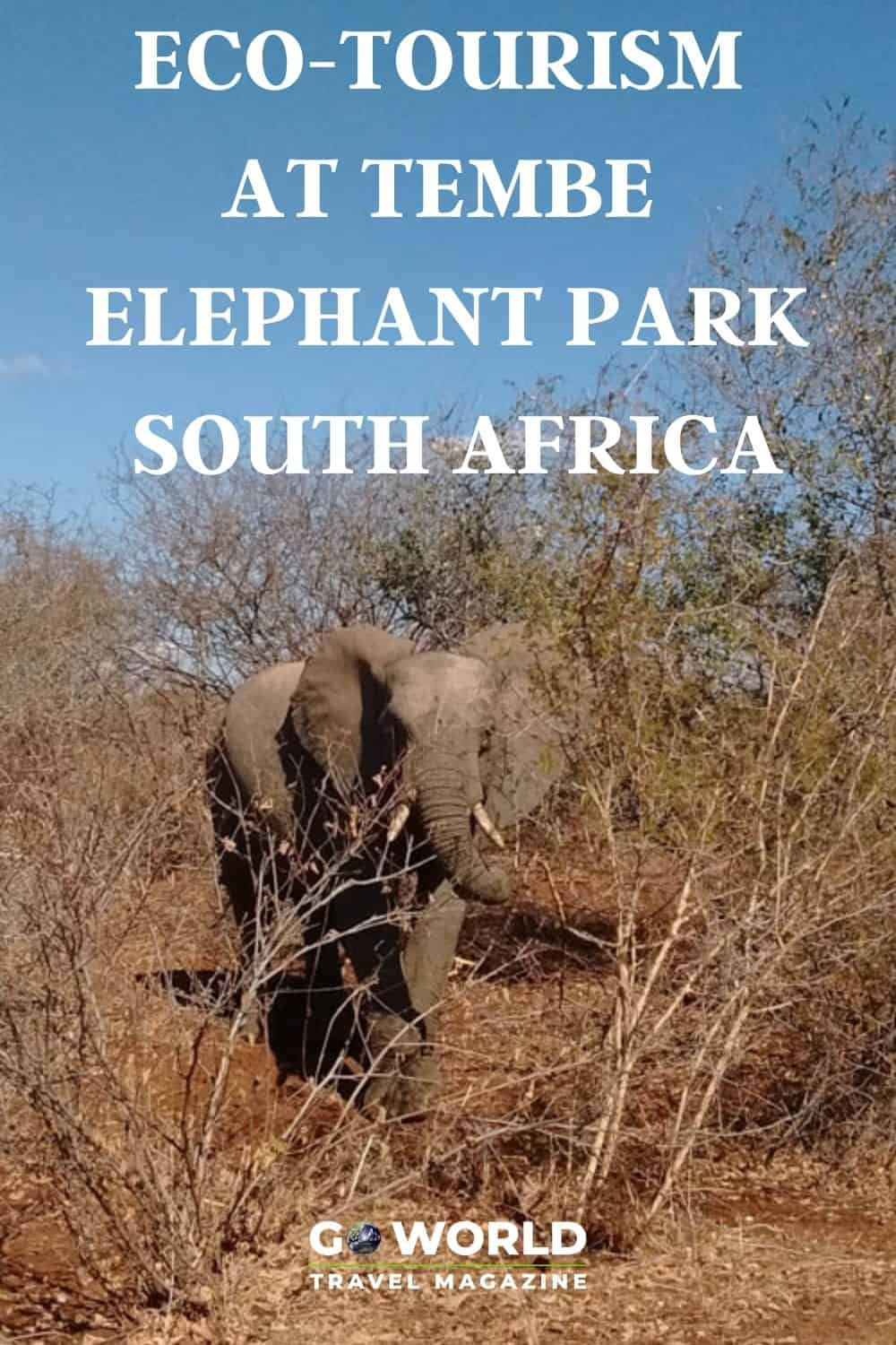 Tembe Elephant Park in South Africa is a community focused on wildlife preservation where you can see protected elephants in natural habitat. #SouthAfrica #Elephantsanctuary #Africawildlife