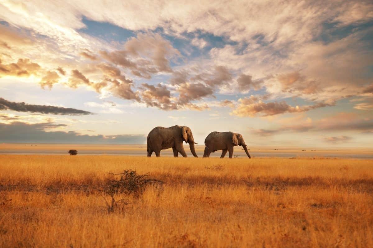 Tembe Elephant Park: A Community of Wildlife Preservation