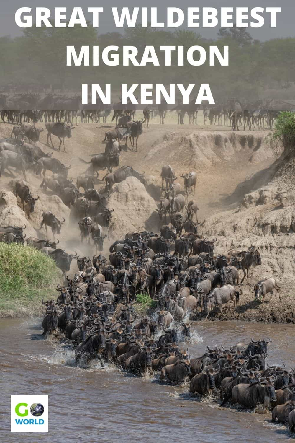 The wildebeest migration in Kenya is one of nature's wonders. It's mysterious, chaotic, deadly, inspiring & the greatest show in the world. #Africa #Kenya #wildebeestmigration