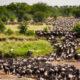 Wildebeest Migration Kenya