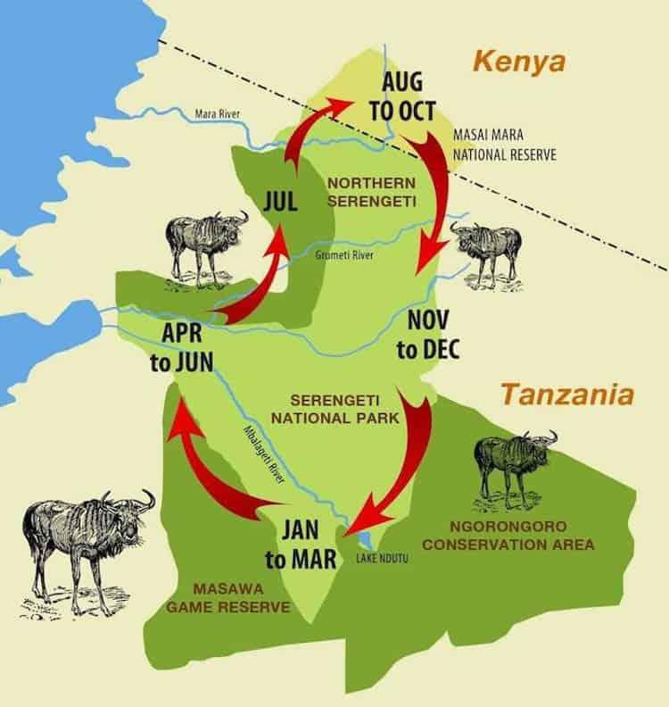 Wildebeest Migration Map & Calendar