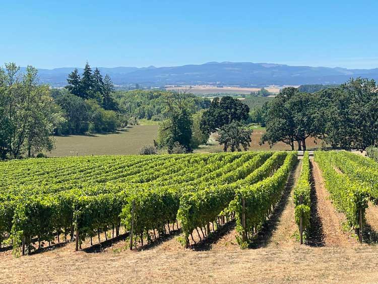 Eola Hills Vineyards in the Willamette Valley in Oregon